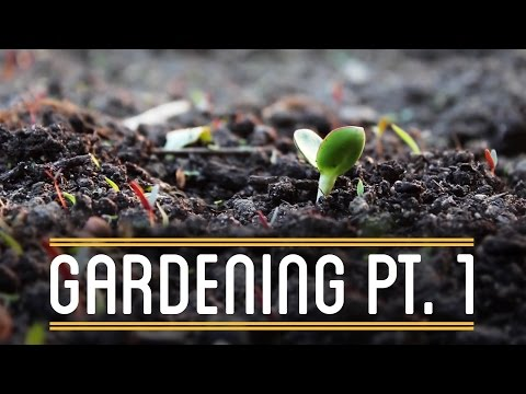 Gardening Pt. 1 | How to Make Everything: Sandwich (2/12)