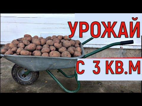 Вопрос: Какой урожай картофеля считается хорошим?