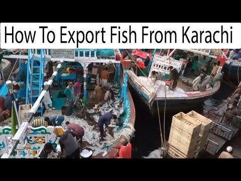 Fish Export From Karachi Fishrey   How To Export Sea Food   Fresh Fish P   Karachi Fish Harbor