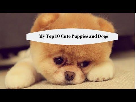 Cute Little Puppies - My Top 10 Cute Dog Breeds