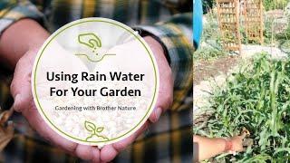 Using Rain Water For Your Garden