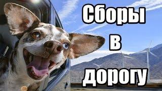 Как собрать собаку в дорогу. Что взять собаке в поездку. Документы для поездки с собакой.