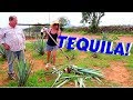 Drinking Tequila! | Part 2