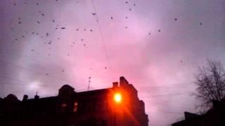 Ужасы 55 школы (птицы-убийцы)