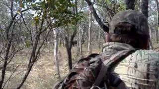 Buffalo Hunt Arnhemland 2010