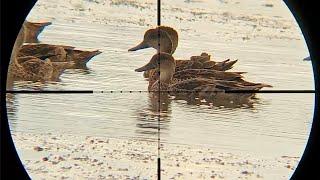 Berburu Burung Belibis Batu (The Nyanggong)