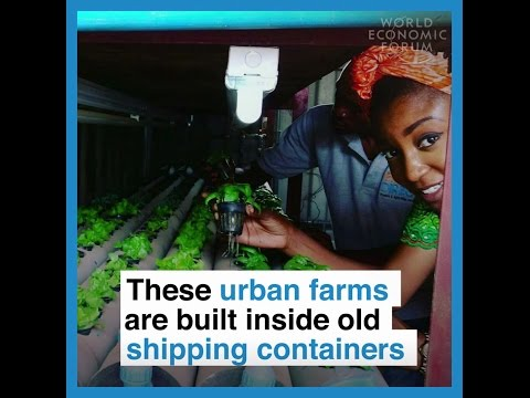 These urban farms are built inside old shipping containers