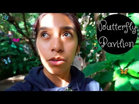 🦋Butterfly Pavilion - Denver, CO (I didn't want to leave)🐛🕷