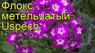 видео Флокс метельчатый Пепперминт Твист