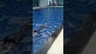 Swimming pool sheo resort hotel  bandung