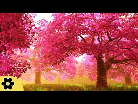 Music for Studying, Relaxing Music, Music for Stress Relief, Focus Music, Background Music, ✿2667C