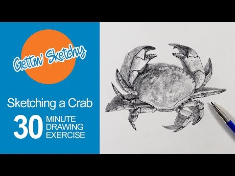 How to Sketch a Crab - Live Drawing Exercise