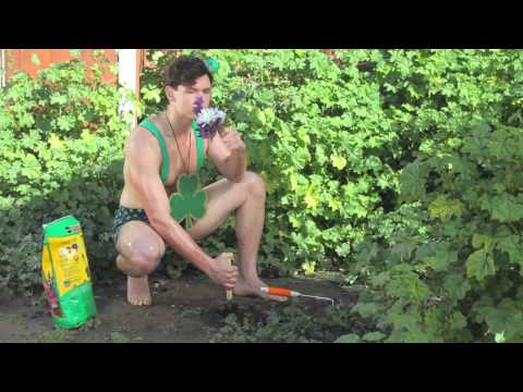 green man single pot