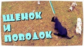 Если щенок не хочет идти на поводке /If puppy doesn't want to walk on a leash