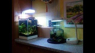 Маленький аквариум на 10л