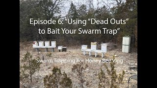 """Episode 6: Using """"Dead Outs"""" to Bait Your Swarm Trap"""
