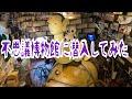 不思議博物館に潜入してみた【はづちゃんねる】 の動画、YouTube動画。