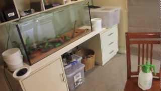 Australian Reptile Room - April update