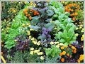 Companion Planting - Controlling Bugs and Weeds