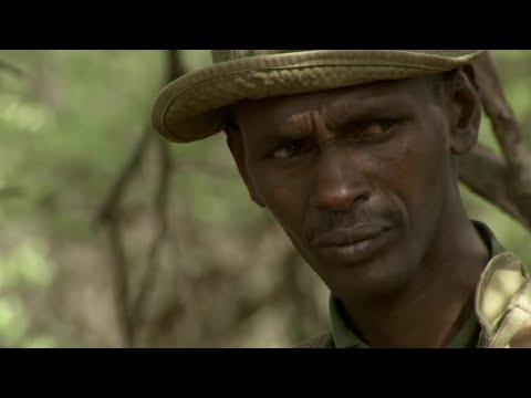 Heartbreaking Truth About Elephant Poaching - This Wild Life - BBC Earth