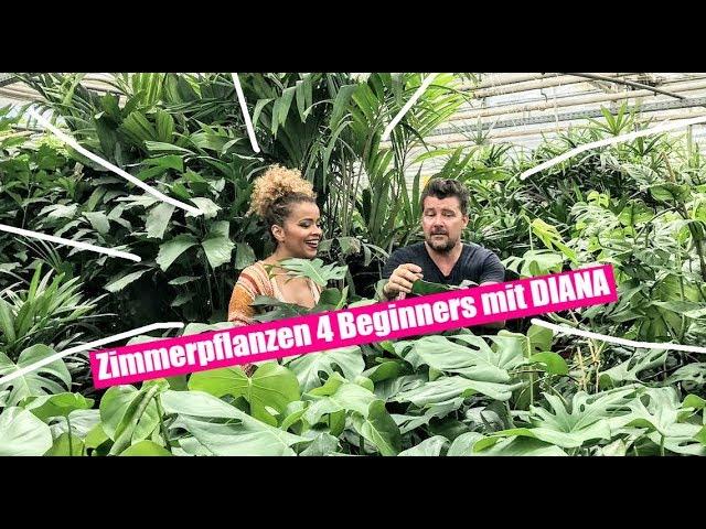 Zimmerpflanzen for Beginners! Monstera oder Banane - die angesagtesten Trendpflanzen für Zuhause