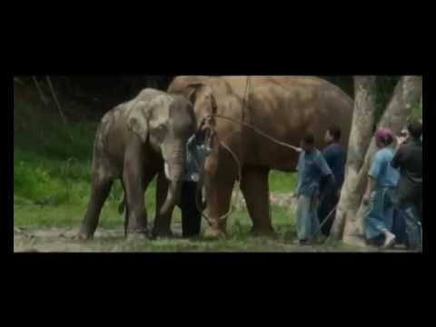 Elephants return to the forest in Thailand