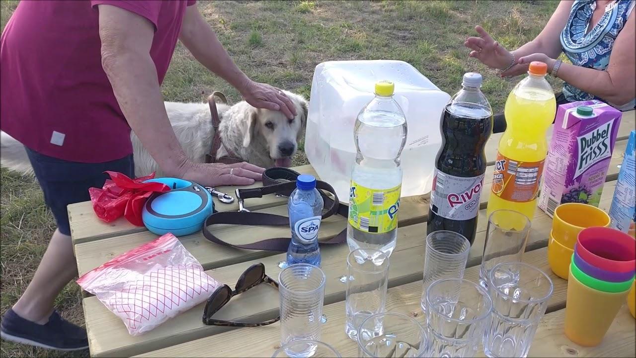 Hondenrenveld Eikendaal