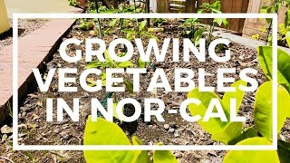 What Vegetables Grow In Northern California - My New Vegetable Garden