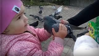 Николь и Илана поймали голубя Развлечения для детей Entertainment for kids