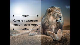 """Презентация """"Красивые животные"""""""