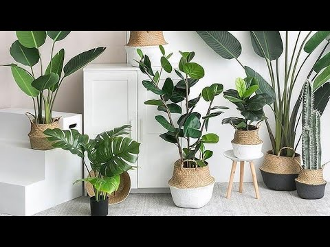 Best Artificial Plants Indoors How To Buy The Best Faux Plants Home Decor Shopping Youtubeshorts Youtube