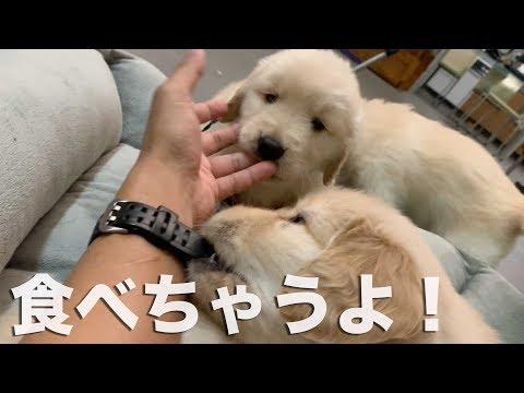 続:子犬たんとの幸せガチバトル