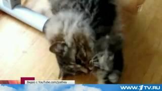 Преступники вернули хозяевам похищенного кота
