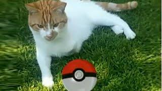 Pokemon Go - Cat Catching