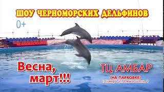 Шоу Дельфинов в Самаре тк Амбар Март 2019