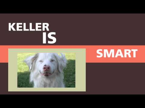 Keller The Double Merle/What Is A Double Merle?