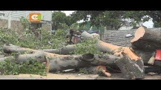 Mwanamke afariki baada ya kuangikiwa na mti Mombasa
