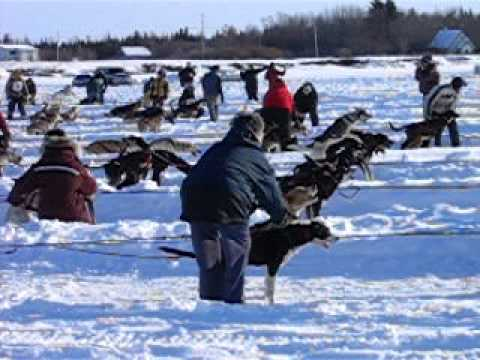 Sled Dog Race, Hay River, NWT