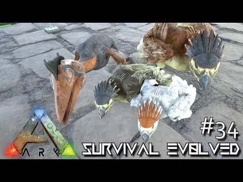 how to get te highest wyvern lvl in ark