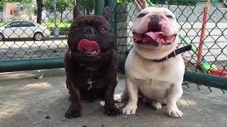 Смешные собаки Приколы про собак Funny Dogs 2019 (Самые Топовые ситуации)