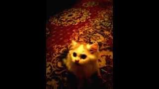 Кошка облизывается при звуке расчески