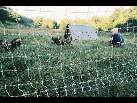 New Grass (for the Turkeys)