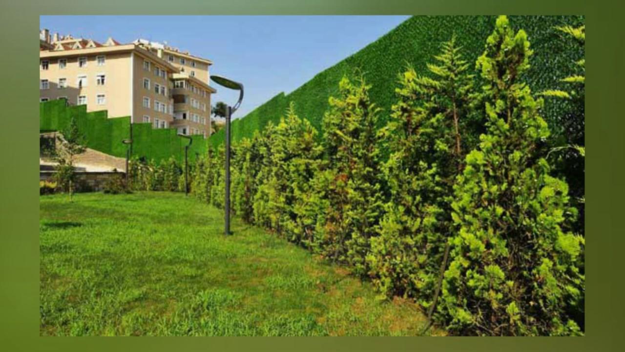 Doğru çim nasıl yapılır Yeşil çim - fotoğraf