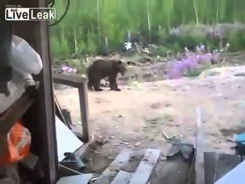 LiveLeak Man Films Final Moments Of His Life - Mother Bear