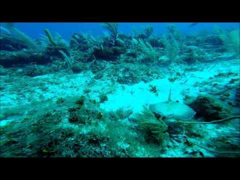 Diving Grand Cayman