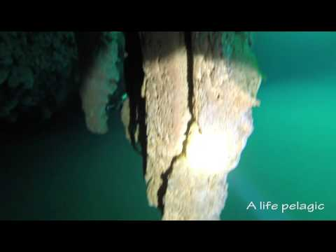 Diving hydrogen sulphide layers and stalactites. Bahamas blue hole.