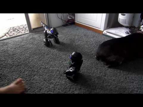 MiPosaur Vs MiP Robot Round Two #Apollobox