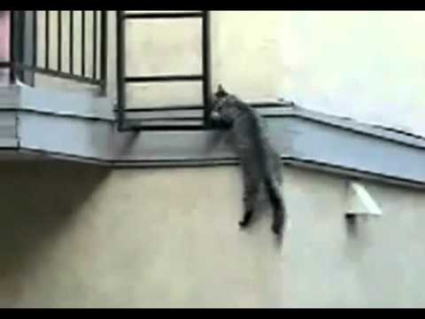 Cat tried to scale wall