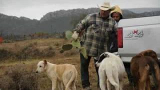San miguel coahuila,,,  la nopalera 2009