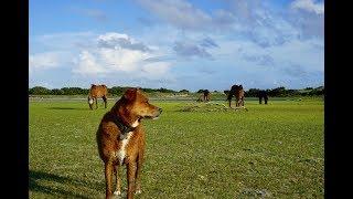 Dog Plays With Wild Horses | Dog VLog #18